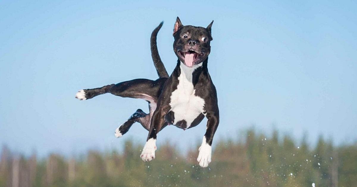 cane sospeso in aria