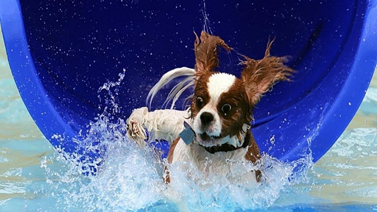 cagnolino cade in acqua
