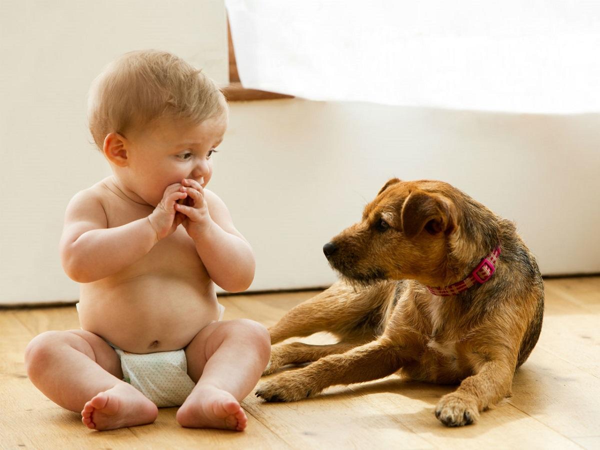 cane e neonato sul pavimento