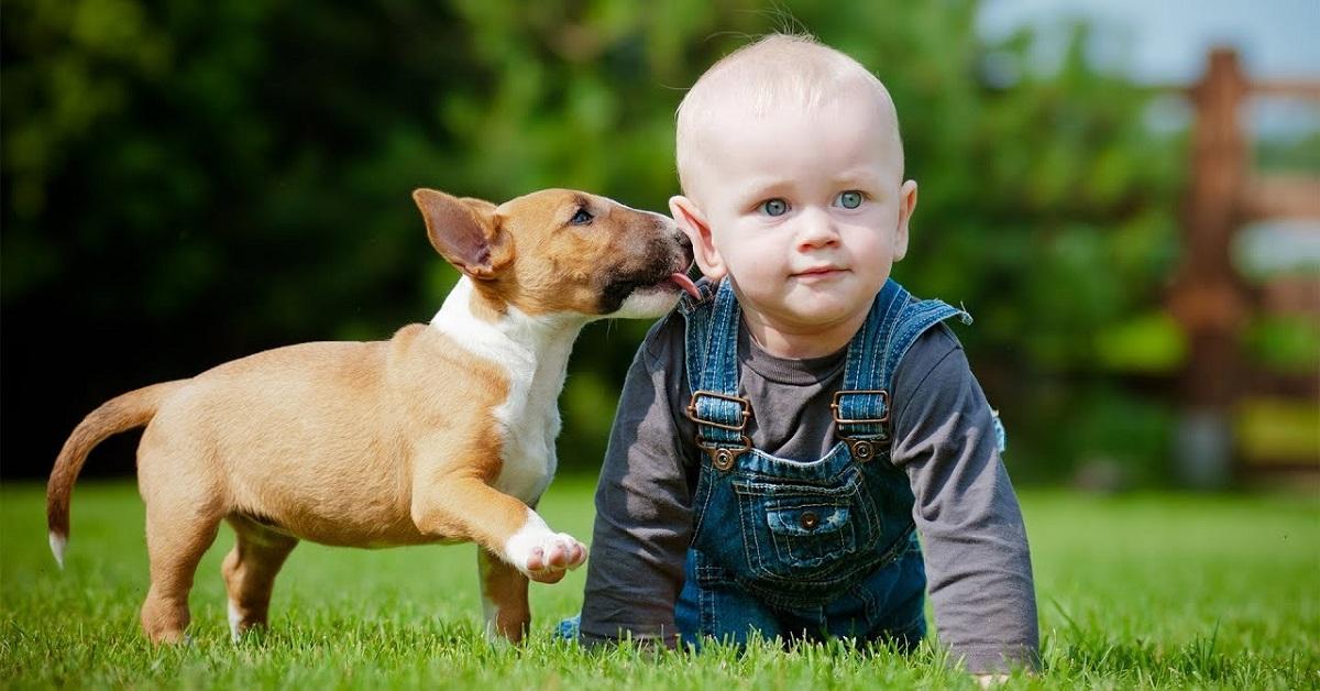cagnolino accanto a neonato