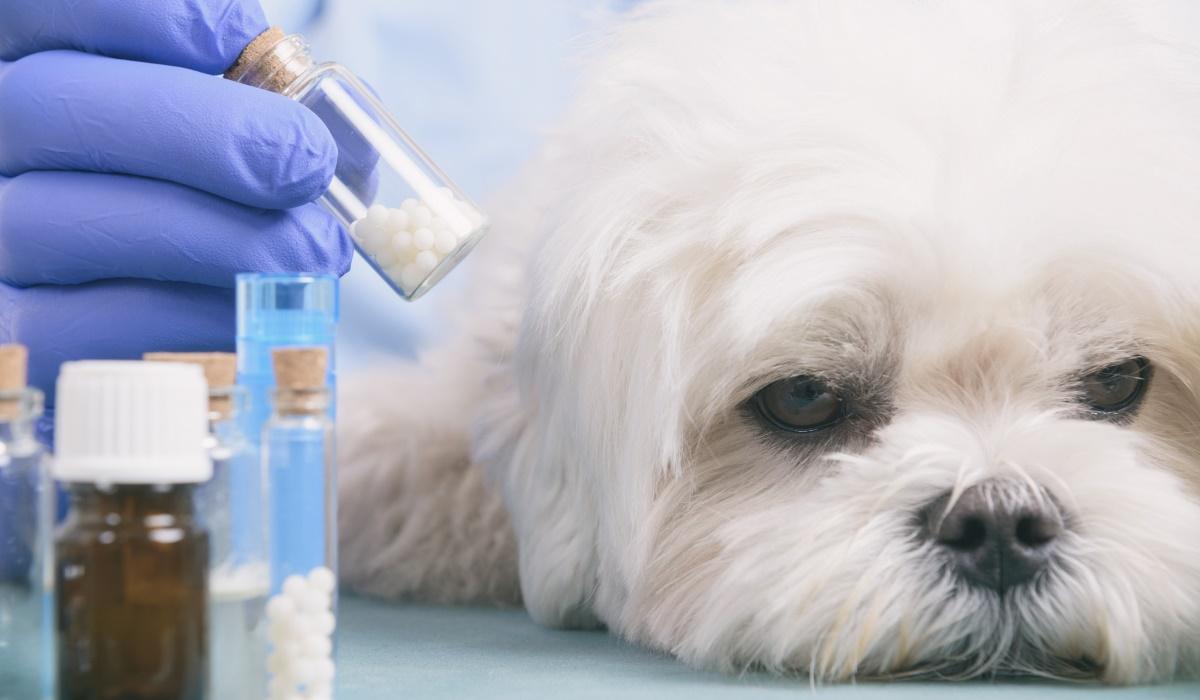 Calcoli di struvite nel cane: che cosa sono, le cause, conseguenze e cura