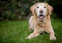 cane anziano in giardino