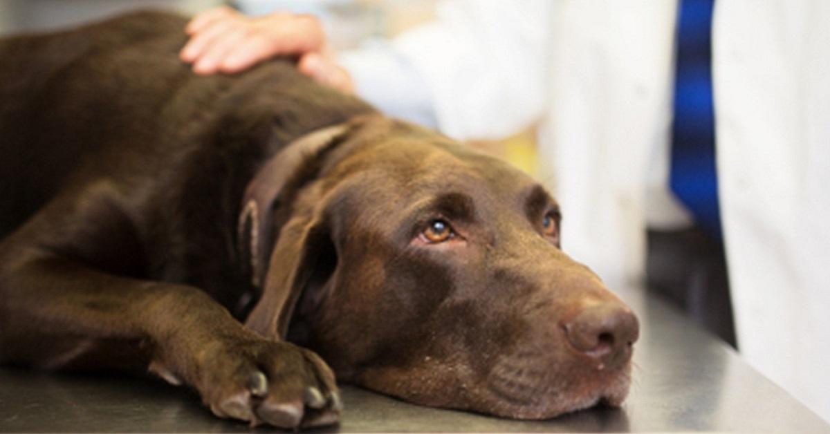 Cane anziano aggredito dagli altri cani: come evitare che accada