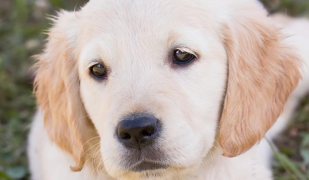 cucciolo con l'espressione triste