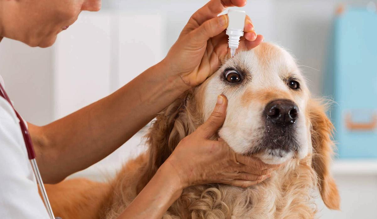 collirio per cani