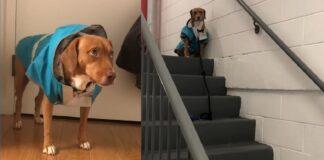 cane che odia uscire di casa quando piove