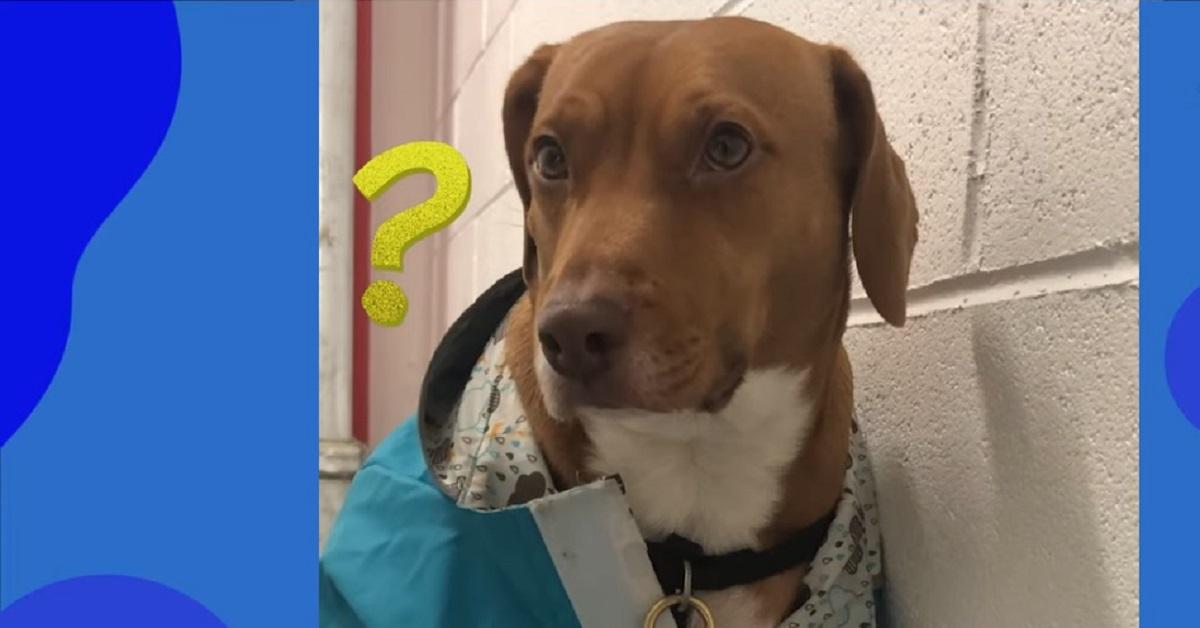 Rosie, la cucciola di cane che odia uscire di casa quando piove (VIDEO)