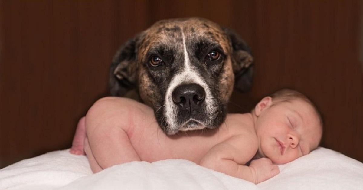 cane si prende cura di neonato
