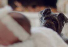 cane guarda bambino