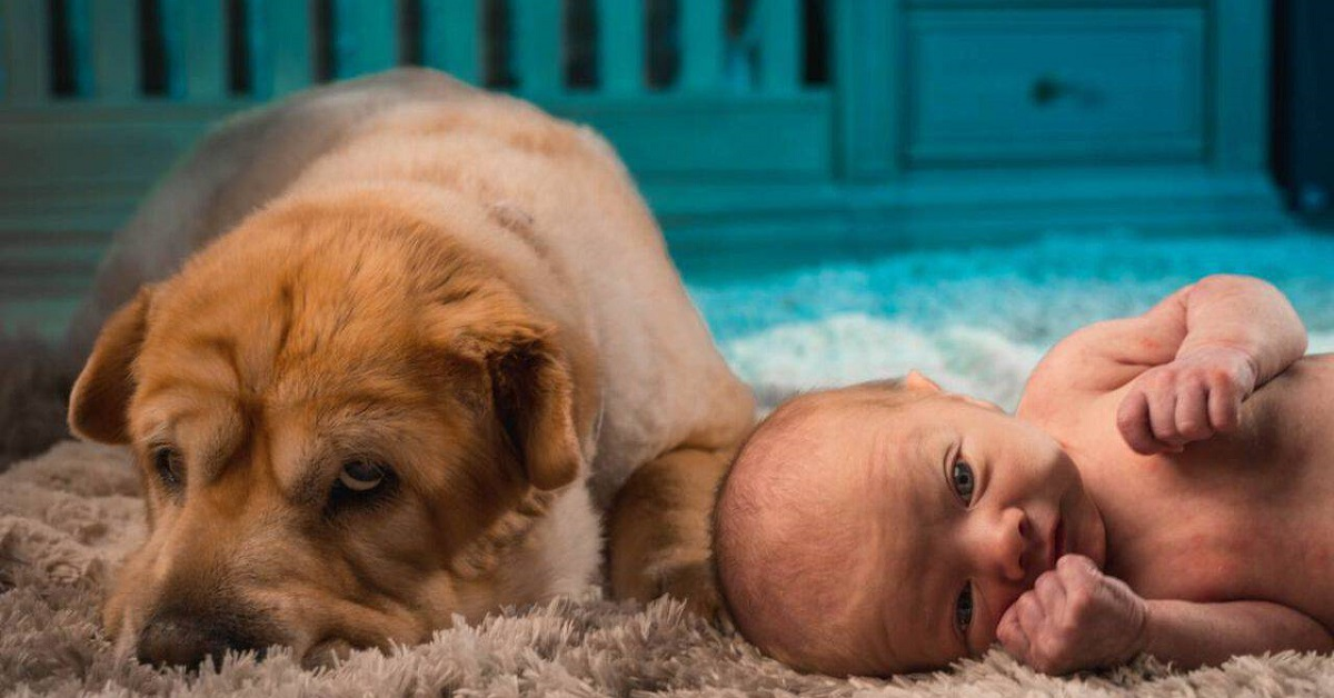 cane accanto a neonato