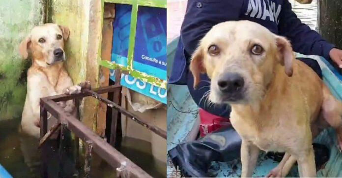 cane salvato in messico