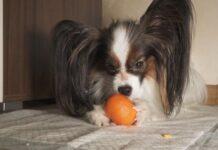 cane e mandarancio