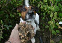 cane e tartufo