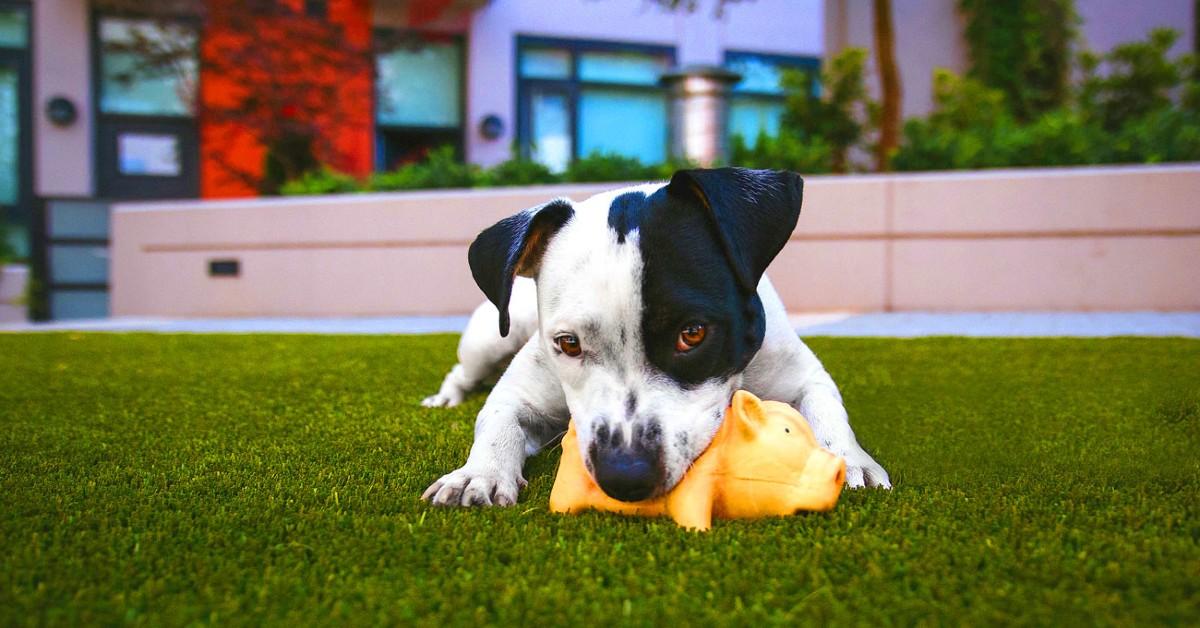 Cibi estivi per i cani: lista di alimenti di stagione che Fido può mangiare