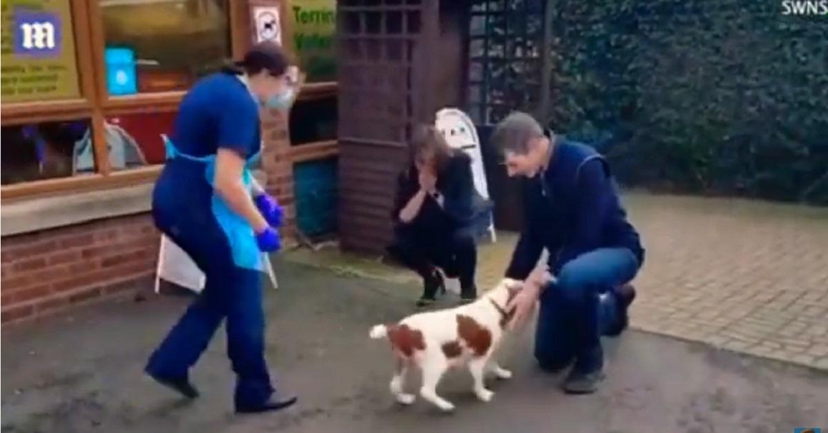 Bonnie, la cucciola di Cocker Spaniel torna dalla sua famiglia dopo 6 anni (VIDEO)