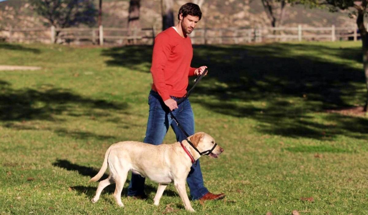 Collare a cavezza per il cane, che cos'è e quali sono i modi di utilizzo