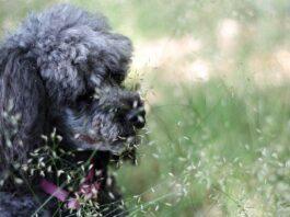 cagnolino nell'erba
