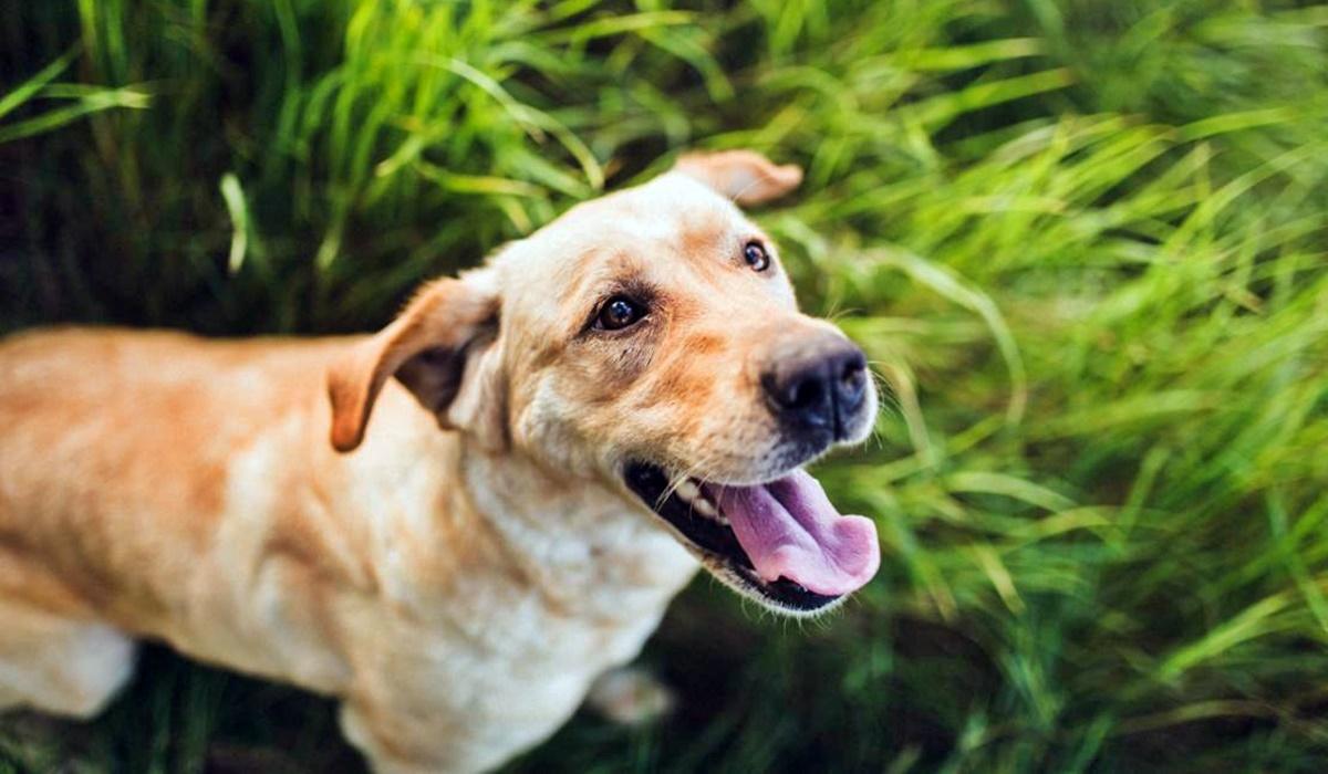 Come capire se il cane ha i vermi: tutti i sintomi, cosa guardare, la diagnosi e la cura