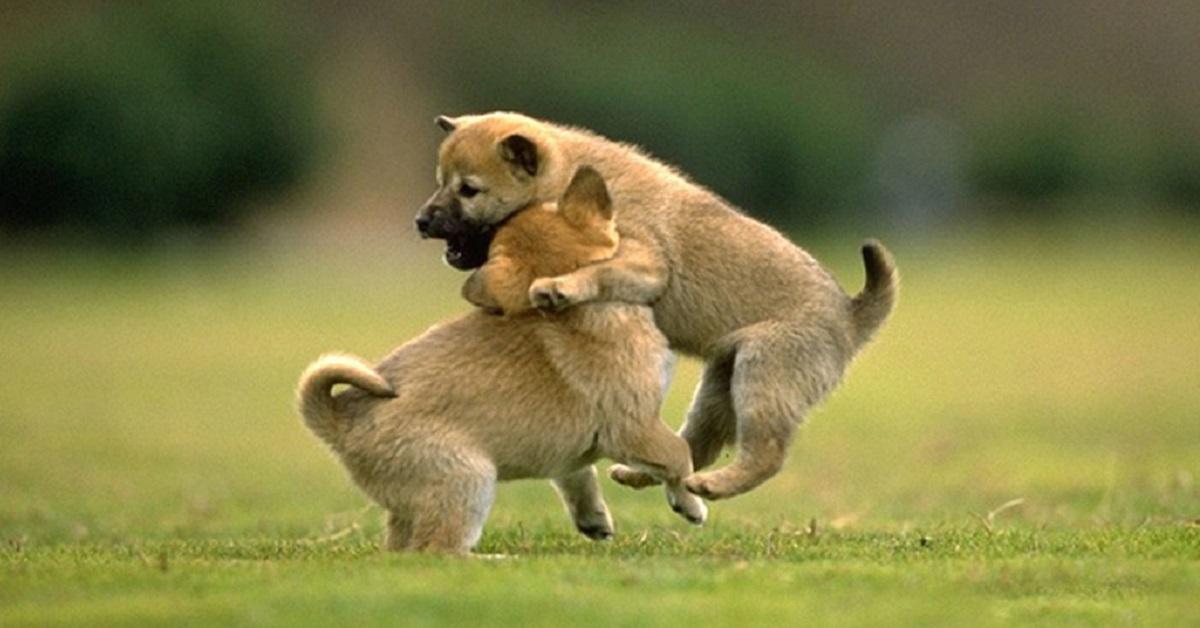 due cagnolini su un prato