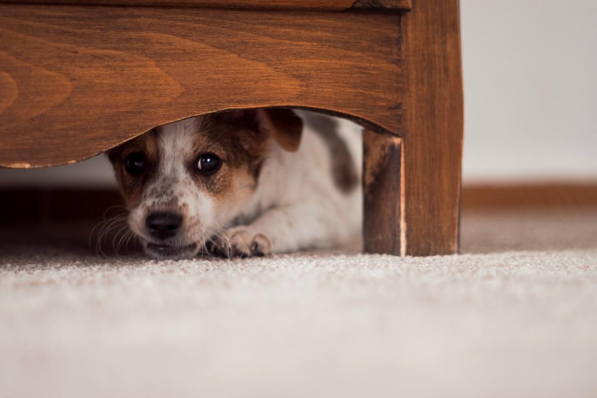 cucciolo si nasconde