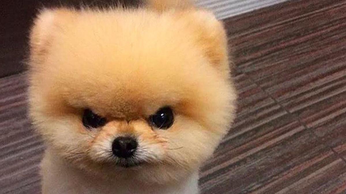 primo piano di un cagnolino