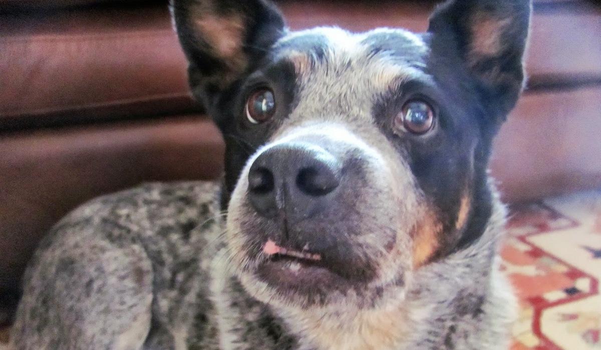 Come nutrire il cane con il muso rotto: metodi per alimentare Fido e farlo stare meglio