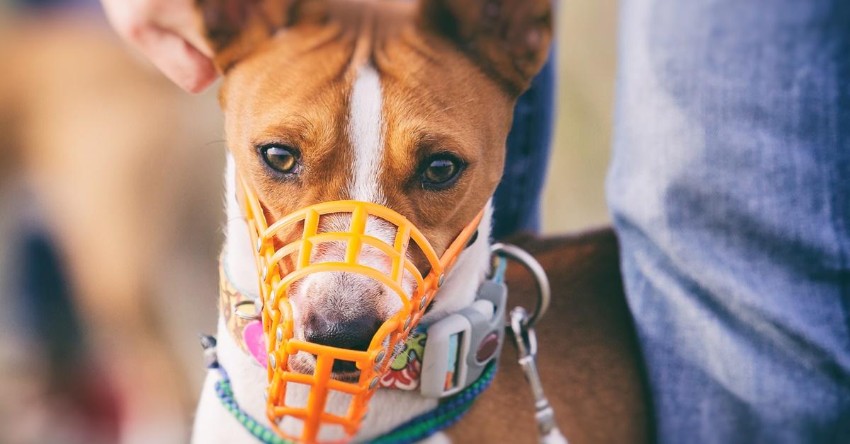 cane con museruola arancione