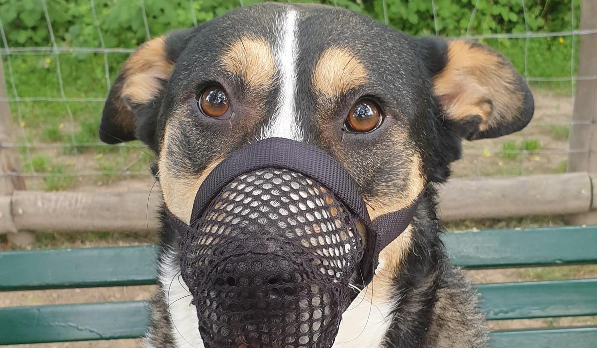 Come scegliere la museruola per il cane: modelli e tipologie per non fare male a Fido