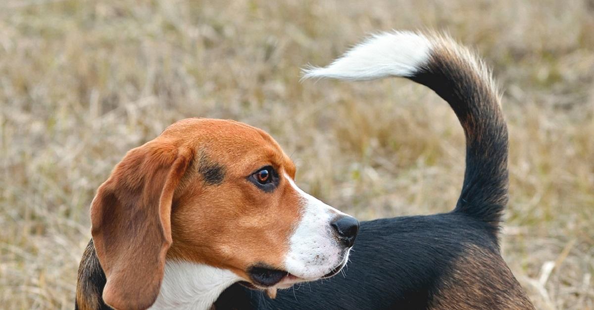 Corpo del cane: cosa ci comunica con le sue posizioni