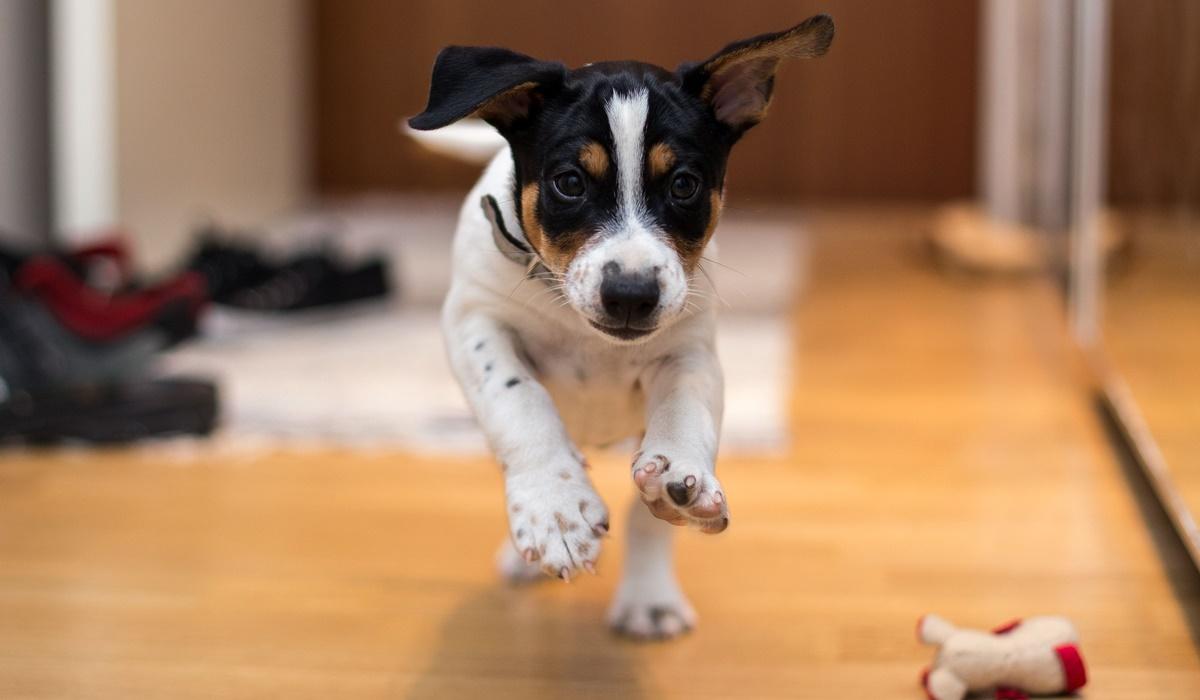 Cucciolo di cane, cose da fargli fare sin da subito per farlo crescere bene