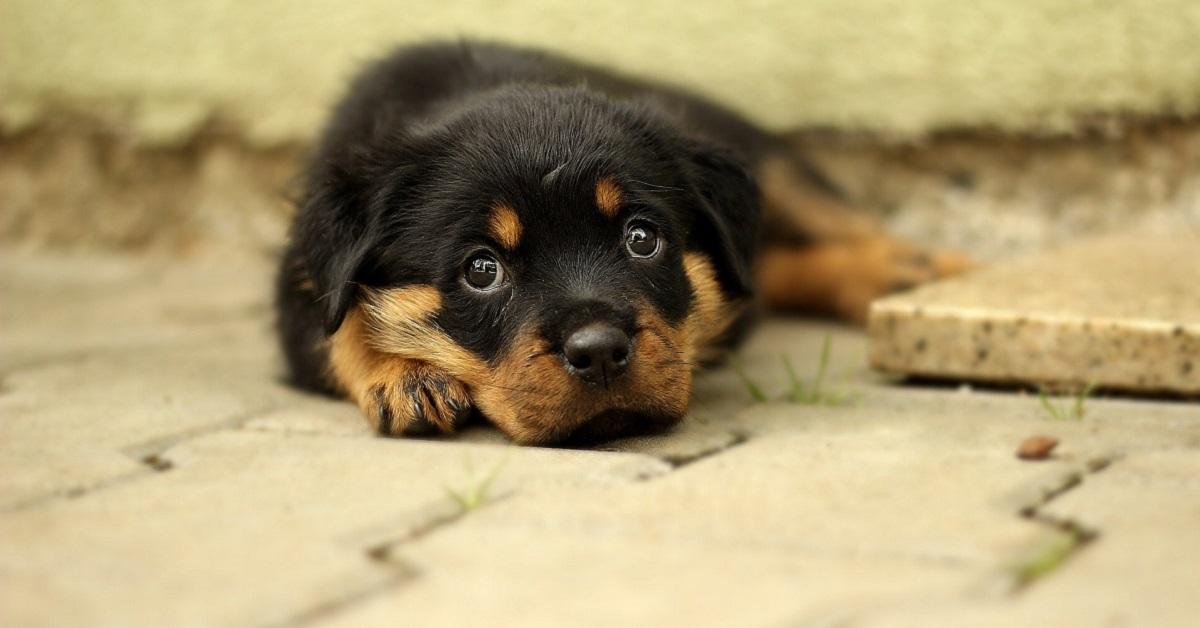 cucciolo di cane per terra