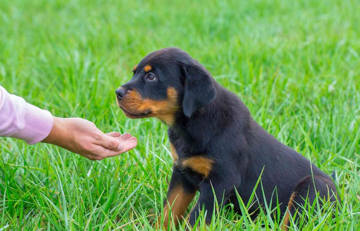 cagnolino seduto sull'erba