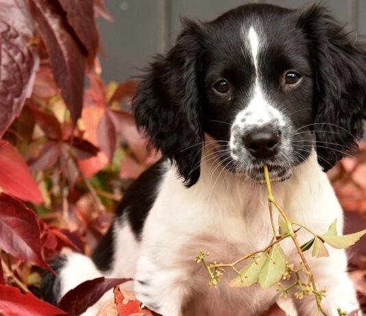 cucciolo di cane tra le foglie