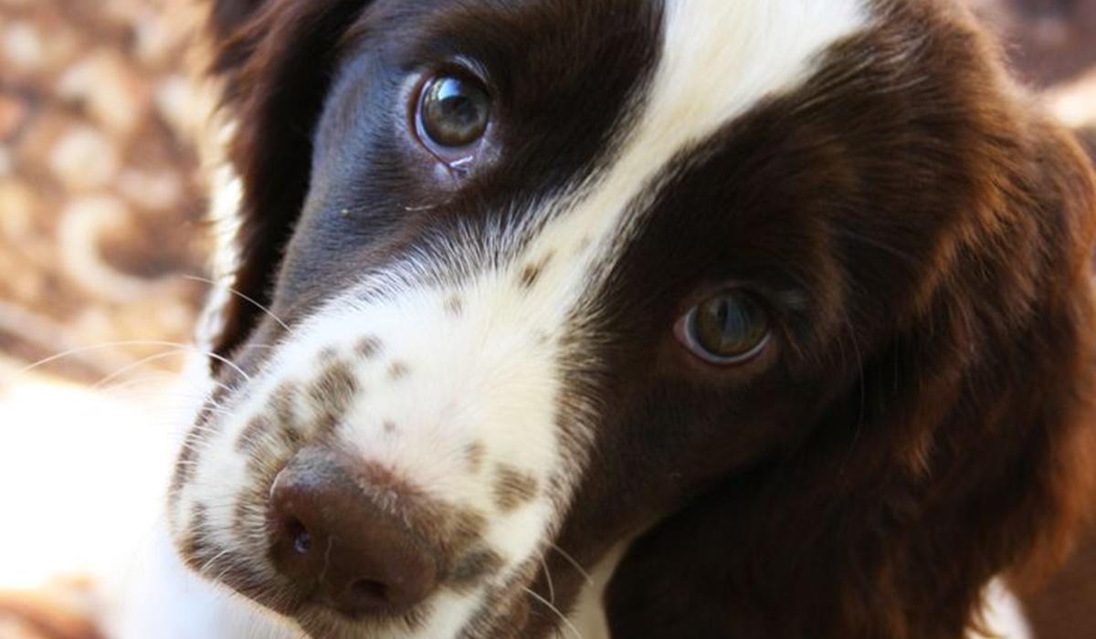 cucciolo con lo sguardo dolce