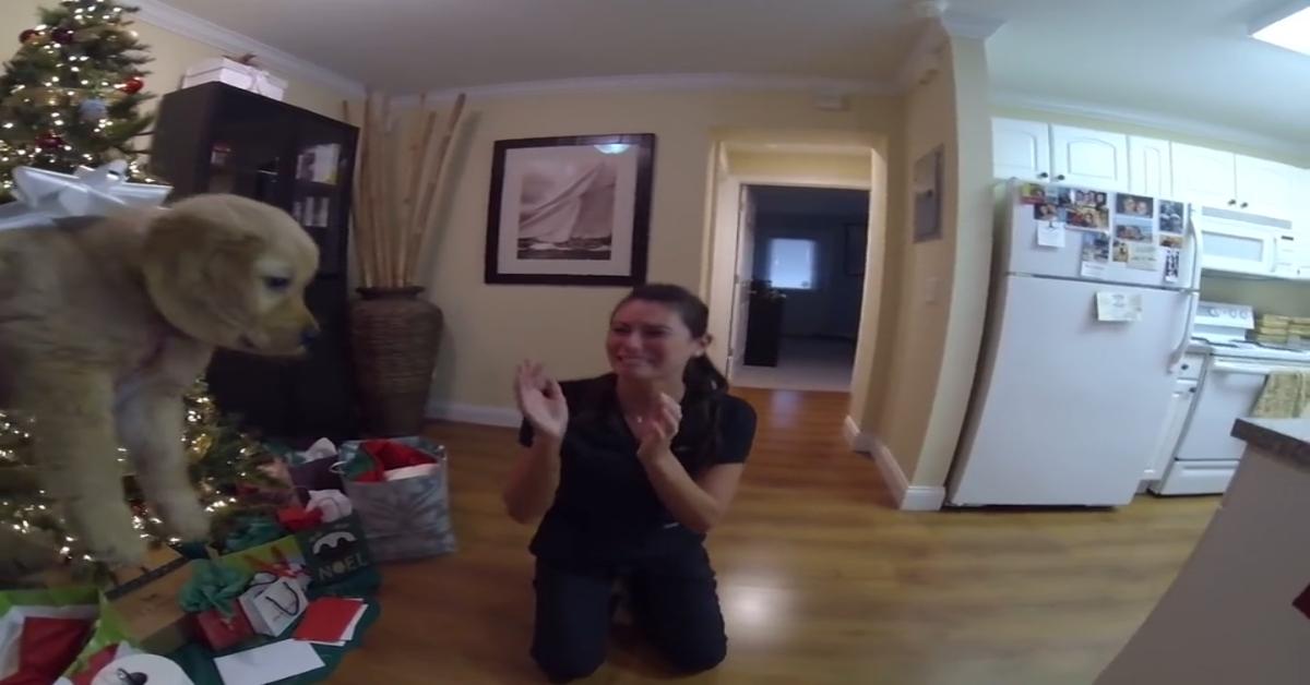 Cucciolo di Golden Retriever è una sorpresa di Natale davvero dolcissima (VIDEO)