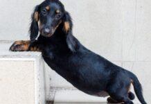cucciolo di cane ha paura delle scale