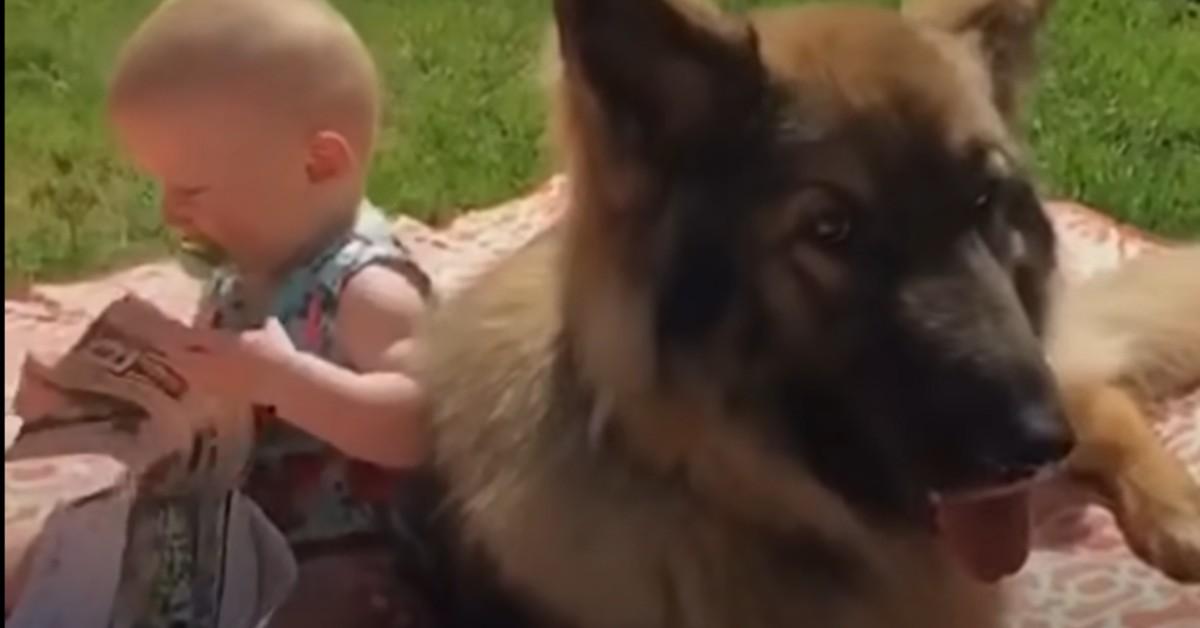 Un cucciolo di Pastore tedesco e la sorellina umana sono molto uniti (VIDEO)