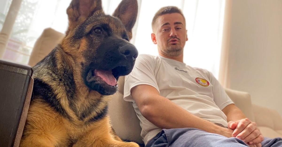 Un cucciolo di Pastore tedesco parla con il proprio padrone (VIDEO)