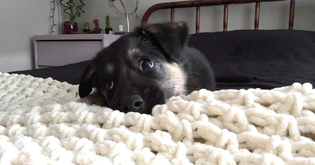 Un cucciolo di Pastore tedesco si diverte con la sua dolce e tenera padrona (VIDEO)