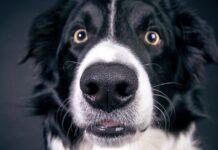 cane con gli occhi sgranati