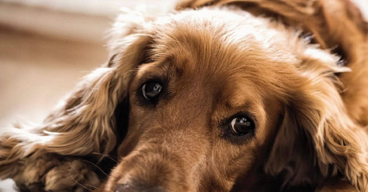 cane letargico