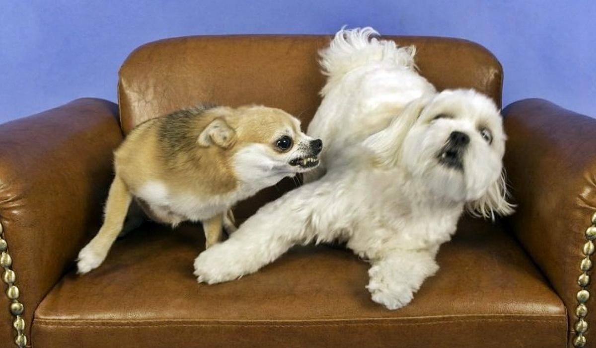 Dividere due cani che litigano: come farlo senza danni per noi e per loro