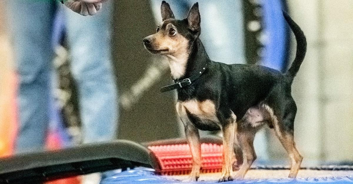 Cani e allenamento: che cos'è il dog balance fit e come funziona?