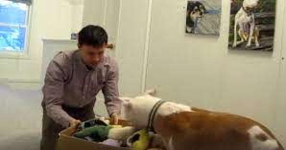 Wallace apre il regalo e trova i peluches