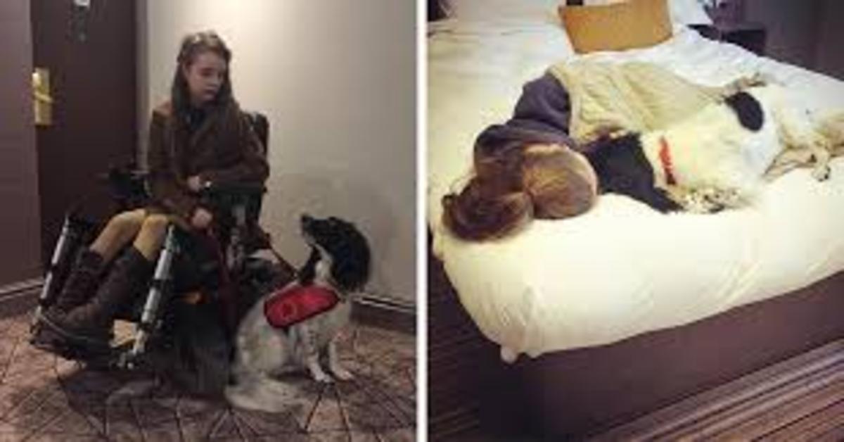 Ted, il cucciolo di cane che è il principale appggio di una ragazzina disabile (VIDEO)