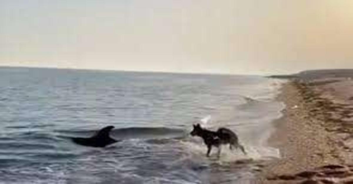 Un cane e un delfino giocano insieme e sembrano divertirsi un mondo (VIDEO)