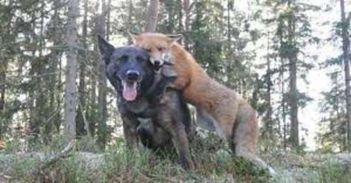 Tinni e Sniffer abbracciati
