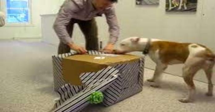 Wallace apre il regalo
