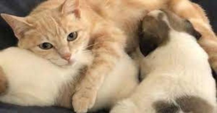 gattina Kathryn allatta cagnolini