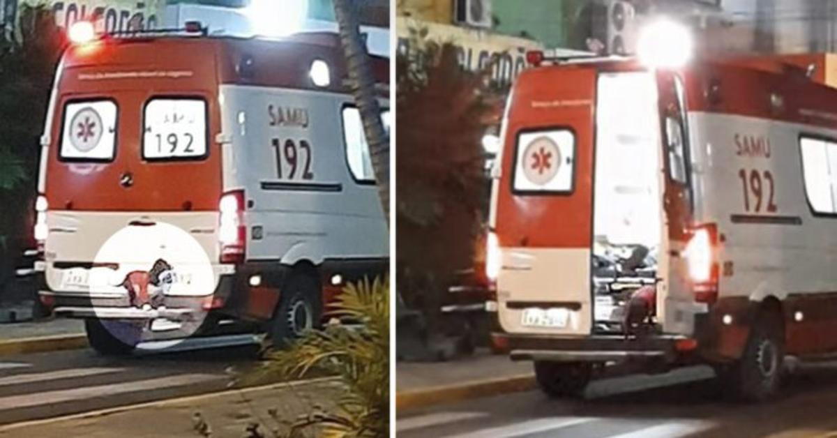 Una cucciola di cane decide di non lasciar solo il padrone colpito da malore e sale in ambulanza  con lui (VIDEO)